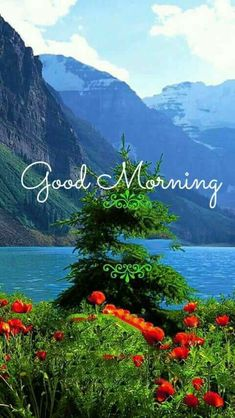 Good Morning Images HD Wallpaper Pics for Whatsapp Beautiful Morning Quotes, Latest Good Morning Images, Good Morning Beautiful Pictures, Good Morning Images Download, Good Morning Picture, Good Morning Flowers, Good Morning Good Night, Morning Pictures, Gd Morning