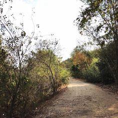 LMU trail | 9.3.2017