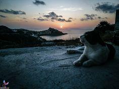 """Karibische Traumstrände, umgeben von unendlichem blauem Wasser, viele Hügellandschaften und Berge zum Erklimmen, Traumurlaub zu einem erschwinglichen Preis – so ungefähr könnte man die Traumurlaubsdestination """"Sardinien"""" in kurzen Worten beschreiben. Polar Bear, Strand, Socrates, Animals, Europe, Caribbean, Sunset, Mountains, Viajes"""