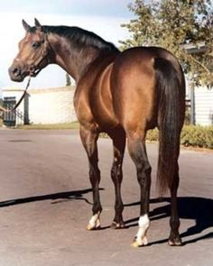 Norcliffe: a Queen's Plate winner sired by Buckpasser