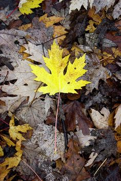 Autumn Feeling  Photograph by Svetlanistaya #Svetlanistaya #Autumn #Fallen Leaves #FineArtPrints