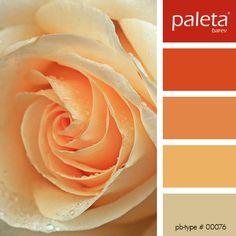 PALETA #00051 - #00100 Orange Color Palettes, Colour Pallette, Colour Schemes, Color Patterns, Color Combinations, Soothing Paint Colors, Paint Color Combos, Colour Board, Color Swatches