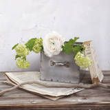 Blumen & Pflanzen Drucke - AllPosters.at Nice picture...