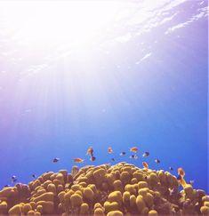 Red Sea, Rotes Meer Rotes Meer Ägypten, Faszination Unterwasserwelt, Ägypten Urlaub Tauchen in Sharm El Sheikh, Unterwasser Tauchen, Schnorcheln, Korallenriffe Fische #urlaub #tauchen #diving #schnorcheln #ägypten rotesmeer #redsea #korallenriffe #reisen #erleben #erlebnis #unterwasser #sharmelsheikh Sharm El Sheikh, Red Sea, Egypt, Beautiful Places, Paradise Beaches, Coral Reefs, Snorkeling
