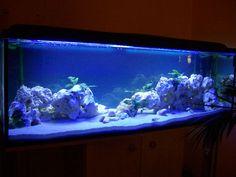 Malawi Aquarium Led Beleuchtung | Malawi Aquarium 500l Mit Led Beleuchtung Malawis Aquarium