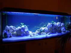 Barschis Malawi Becken - Aquarium Forum