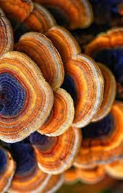 Image result for pattern in nature