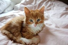 I want this kitty . . . so beautiful!