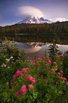 vurtual:    Reflection Lakes (by Kevin Pieper)An image from Mt. Rainier National Park in the early morning.