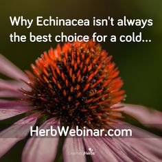 Free webinar today! Join us: http://herbwebinar.com