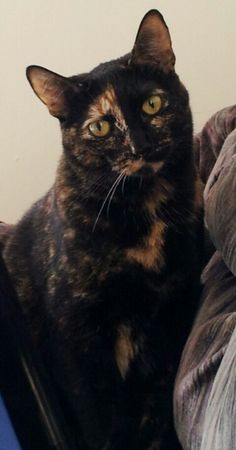 Tortoiseshell cats are the best!!