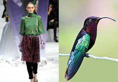 Hummingbirds & Chanel