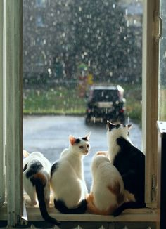 A rainy day means indoor time for cats I Love Cats, Cute Cats, Funny Cats, Animal Gato, Mundo Animal, Crazy Cat Lady, Crazy Cats, Chat Kawaii, Cat Window