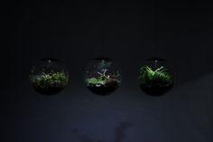 Delicate Globe LED Terrariums – Fubiz Media
