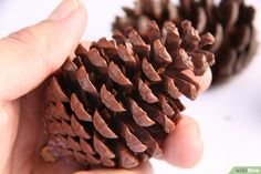 How to Preserve Pinecones: 8 Steps (with Pictures) - wikiHow