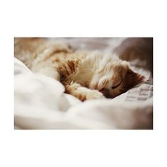 in love with wonderland ❤ liked on Polyvore featuring animals, pictures, cats, backgrounds and photos