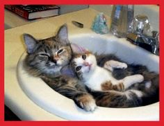Photo of Damn cute cats! for fans of Cute Kittens 9807043 Animals And Pets, Baby Animals, Funny Animals, Cute Animals, Cute Kittens, Cats And Kittens, Beautiful Cats, Animals Beautiful, Gatos Cats