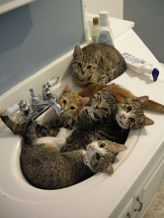 This is how my kitties looked when I first brought them inside (semi-feral mother), except my gang huddled around the toilet! They were so scared. And now? Spoiled rotten :)
