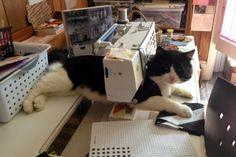 Quilt Construction supervisor