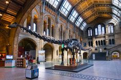 Outcry in UK as Natural History Museum's Dippy goes the way of the dinosaurs