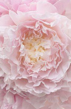 pink.quenalbertini: Soft pink flower | goawaycomeback