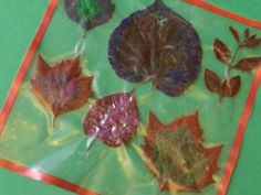 Pressed Flower Place Mats and other activities - FamilyEducation.com    *could also place colored tissue paper to make it look like stained glass.