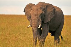 The Big Five in Kenya #elephant