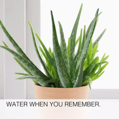 These low light houseplants are hard to kill and don't require a lot of maintenance, so they are the perfect indoor plants! As a bonus some of these houseplants are also air purifying plants that will purify the air in your home. Succulents Garden, Garden Plants, Indoor Plants, Planting Flowers, Vegetable Garden, Flower Plants, Plants For Balcony, Indoor Bamboo Plant, Garden Mulch