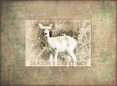 SOUVENIR: Season's Greetings. A nostalgic reverie. A captivating image of a deer set in a vintage handwritten frame.  From the Pomelo Press Winter Holiday Greeting Cards Collection.