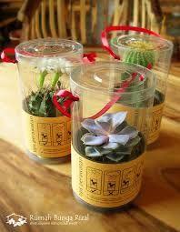 souvenir pernikahan tanaman hias di bali - Google Search