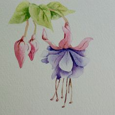 watercolor paintings of fuchsia | Monday, July 21, 2008
