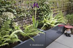 Charcoal grey planters with iris and fern with Phillipe Stark gnome stool,on the patio in Irenie and Adam Cossey's rear garden in North London, UK. Photographed in June