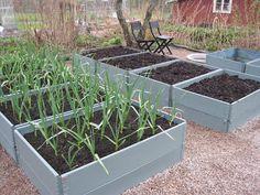 http://cesarstradgard.blogspot.dk/2010/05/sparris-och-purjo-planterad-i.html