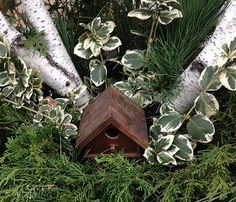 """Winter containers are every bit as much fun to put together as summer containers, and the rule """"thriller, spiller, filler"""" still applies. Check out blogger Tara Nolan's winter container inspiration at Savvy Gardening. 