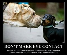 Dogs ... don't make eye contact
