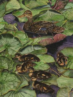 """Among the Waterlilies""  Mallard Duck and Her Chicks  Original Watercolor"
