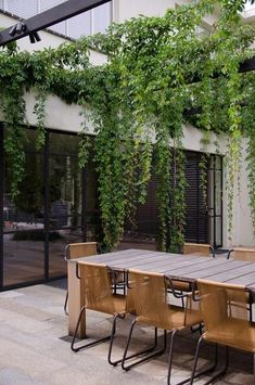 Back veranda? Contemporary Patio by Eckersley Garden Architecture Parthenocissus quinquefolia virginia creeper draping from pergola Outdoor Areas, Outdoor Rooms, Outdoor Living, Outdoor Furniture Sets, Outdoor Retreat, Furniture Ideas, Indoor Outdoor, Outdoor Material, Outdoor Chairs