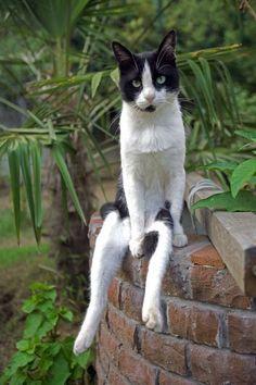 Un Chat assis comme un Humain