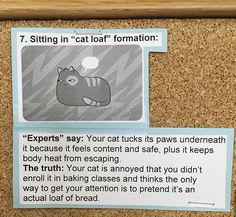This Vet Put Explanations Of 15 Common Cat Behaviours On His Cork Board, And It's Hilarious