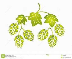 picture+of+hops | Stock Image: Hops