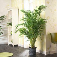 Kamerplanten - Groen in huis - Vrije tijd - Libelle