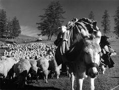 El cordero sobre el asno - Robert Doisneau