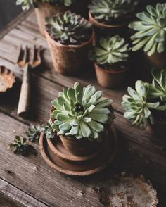 Plant Aesthetic, Still Life Photos, Cactus, Garden Soil, 4 Year Olds, Flower Pictures, Amazing Flowers, Aesthetic Pictures, House Plants