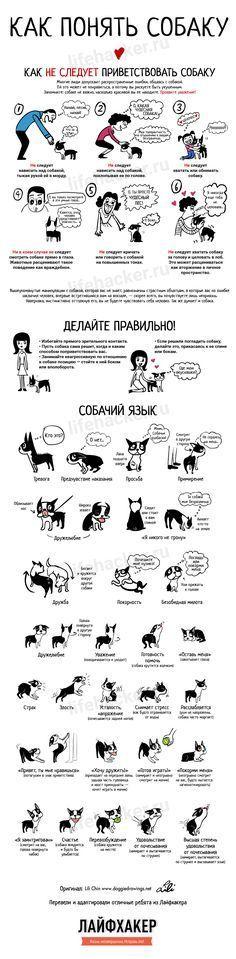 Как понять собаку