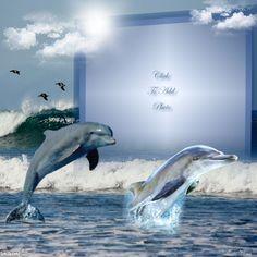 ~*~ Dolphins! ~*~ http://imikimi.com/main/view_kimi/1gTVo-4ib