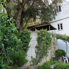 Help create paradise on a stunning 7 hectare terraced farm close to Serta, Portugal.