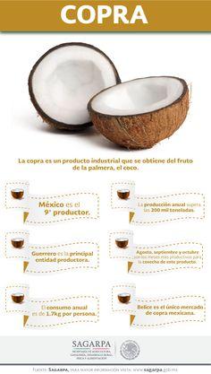 La copra es un producto industrial que se obtiene del fruto de la palmera, el coco. SAGARPA SAGARPAMX