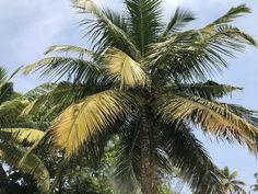 Incredible India, Kerala, Portrait, Nature, Plants, Travel, Voyage, Men Portrait, Portrait Illustration