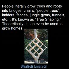 Trees are awesome!