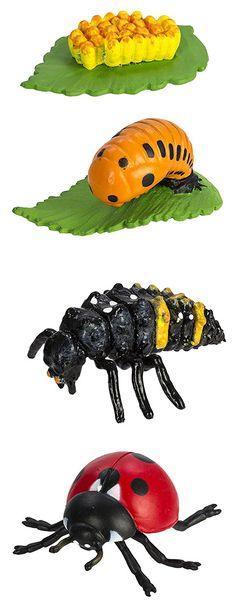 Safari 269129 Lebenszyklus eines Frosches: Amazon.de: Spielzeug